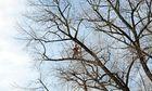 Baumschnitt ...mit Gefahrenzulage