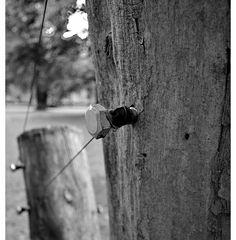 Baumserie 6 Halterung für fliehende Bäume....