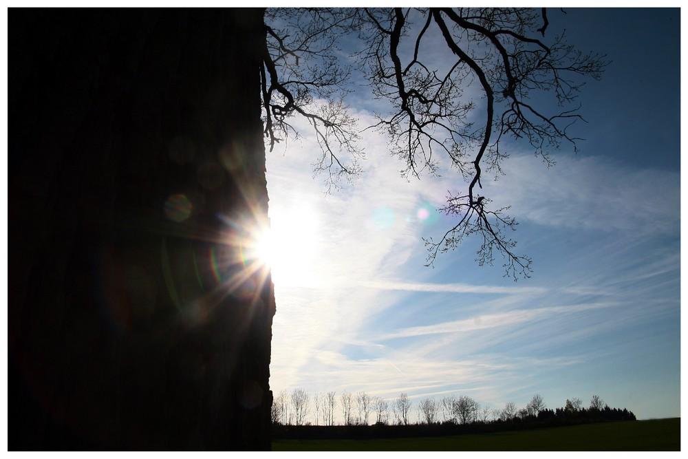 Baum&Sonne