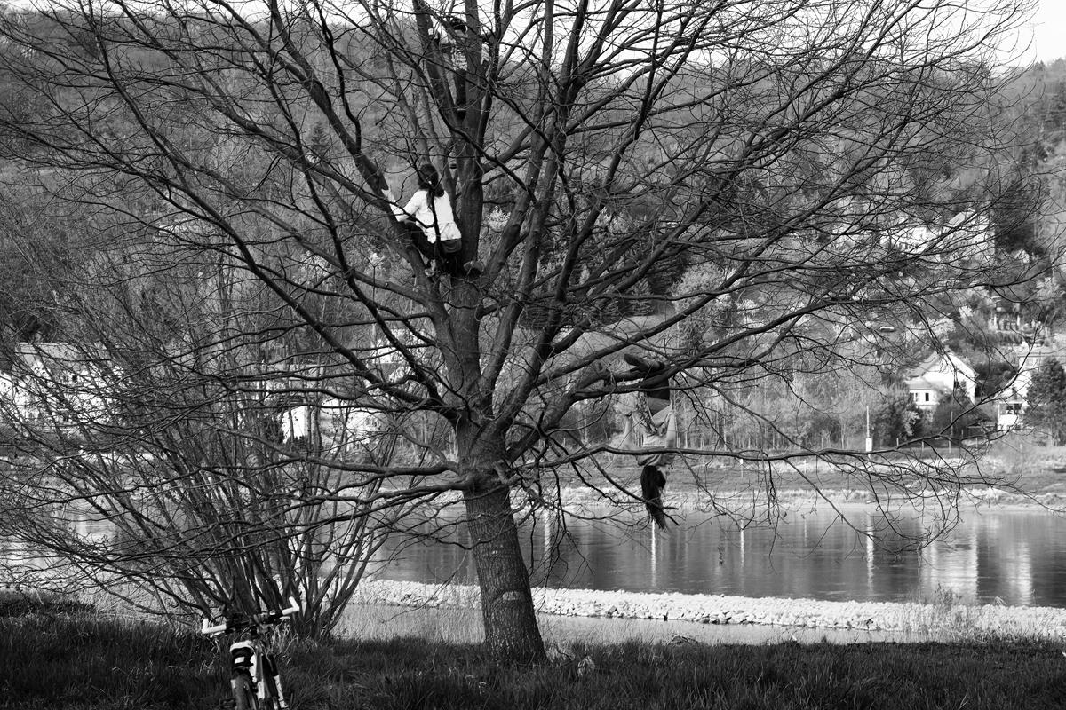 BaumSpiel