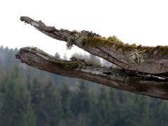 Baumsprache