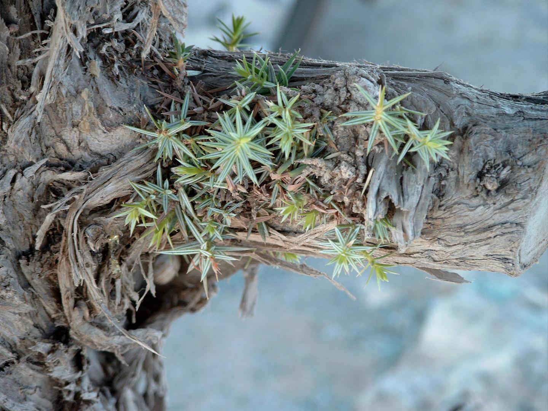 Baumstamm mit Blütenbewuchs