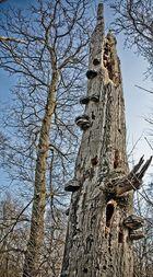 Baumsterben
