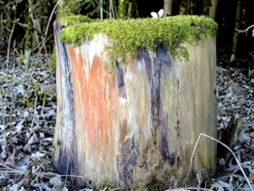 Baumstumpf am Waldrand