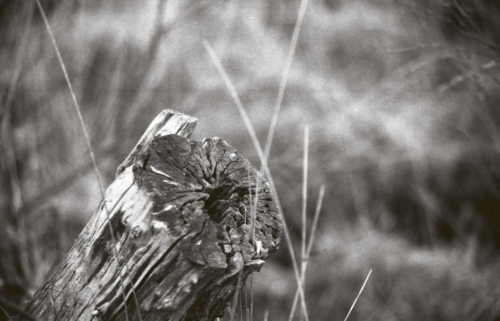 Baumstumpf im Moor