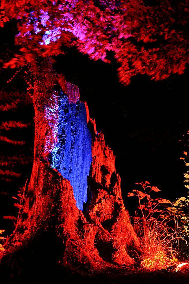 Baumstumpf im Schloss Dyck
