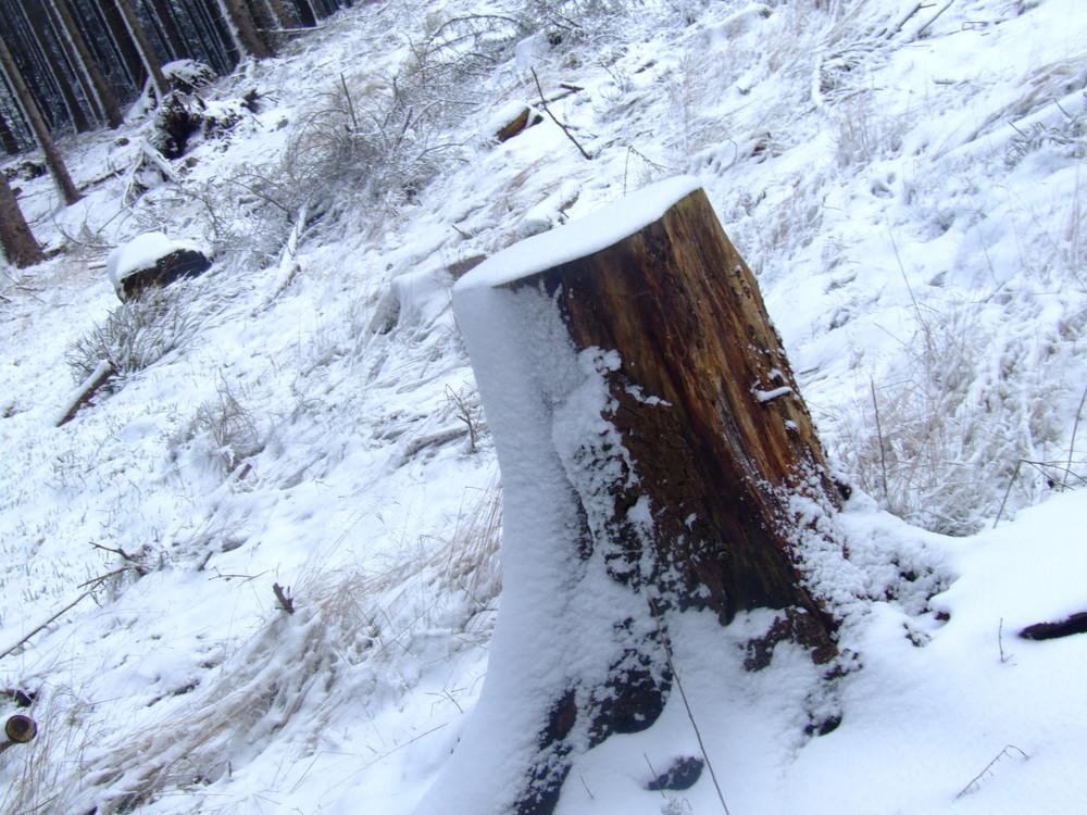 Baumstumpf im Schnee