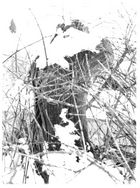 Baumstumpf im Winter