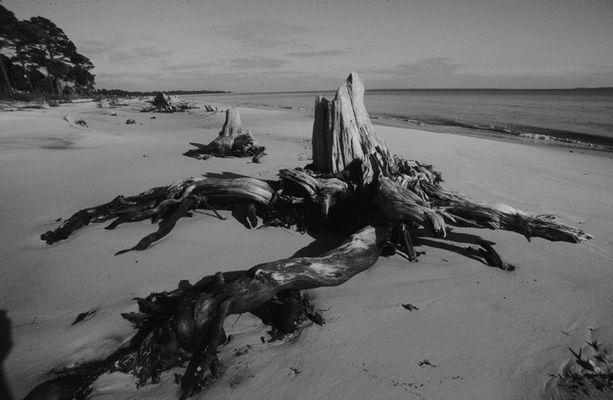 Baumstumpf in Pensacola