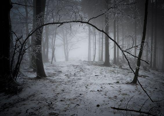 Baumtor im Winterwald