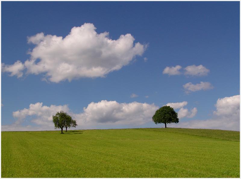Baumwärts ziehen by Klaus Frei