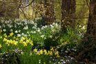 Baumwiese im Frühling