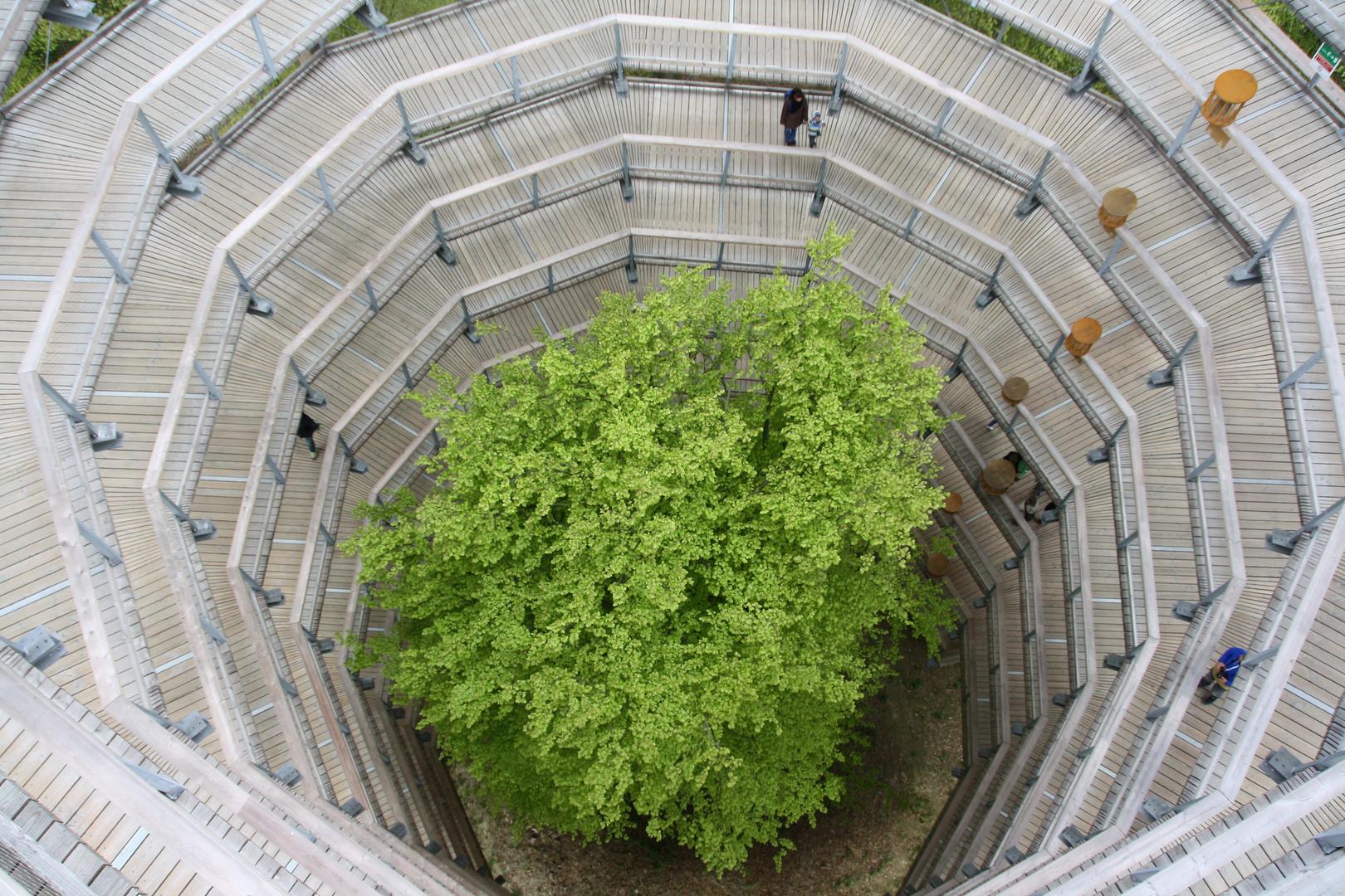Baumwipfelpfad Rügen