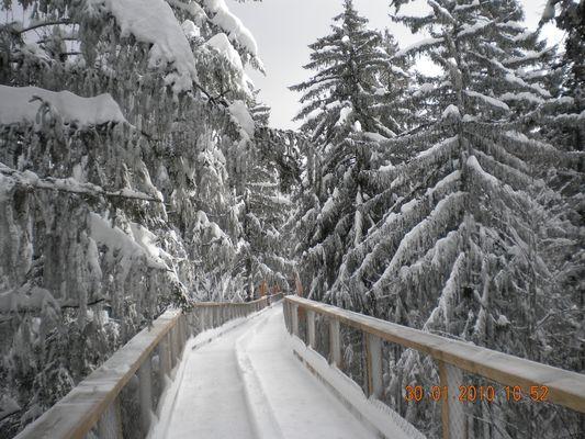 Baumwipfelweg Bad Kötzting