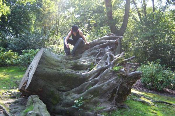 Baumwurzel im Stadtpark Bochum