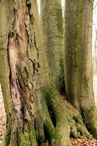 Baumzeichnungen 3