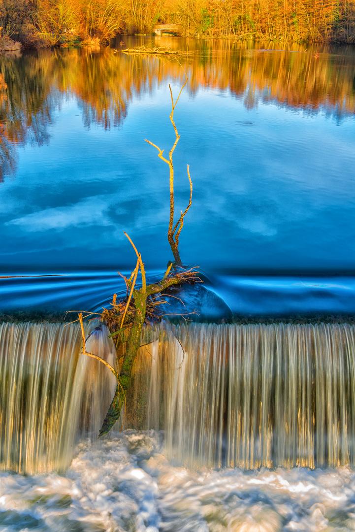 Baumzweig im See