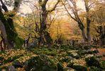 Bautiful Autumn..