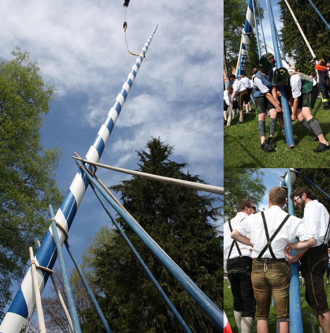 Bayerische Burschen stellen einen Maibaum auf