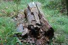 Bayerischer Wald 3