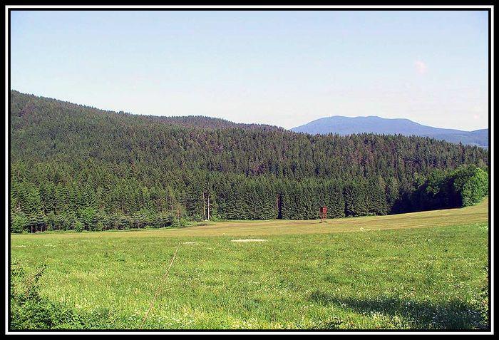 Bayerischer Wald am Morgen