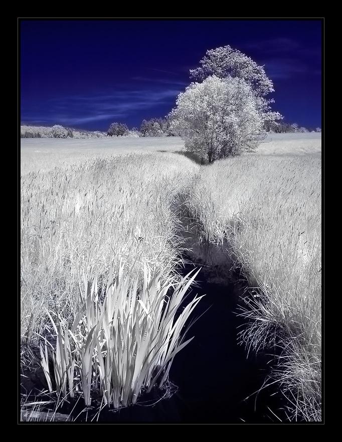 bayrische Moorlandschaft