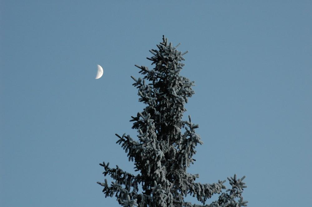 **Bayrischer Wald**