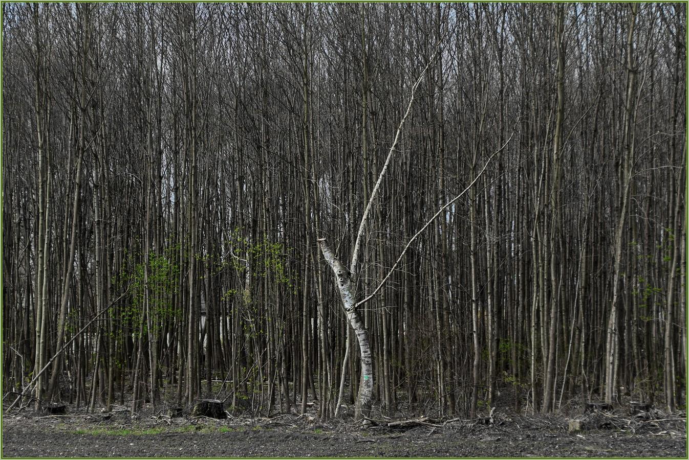 Bayrischer Wald ?