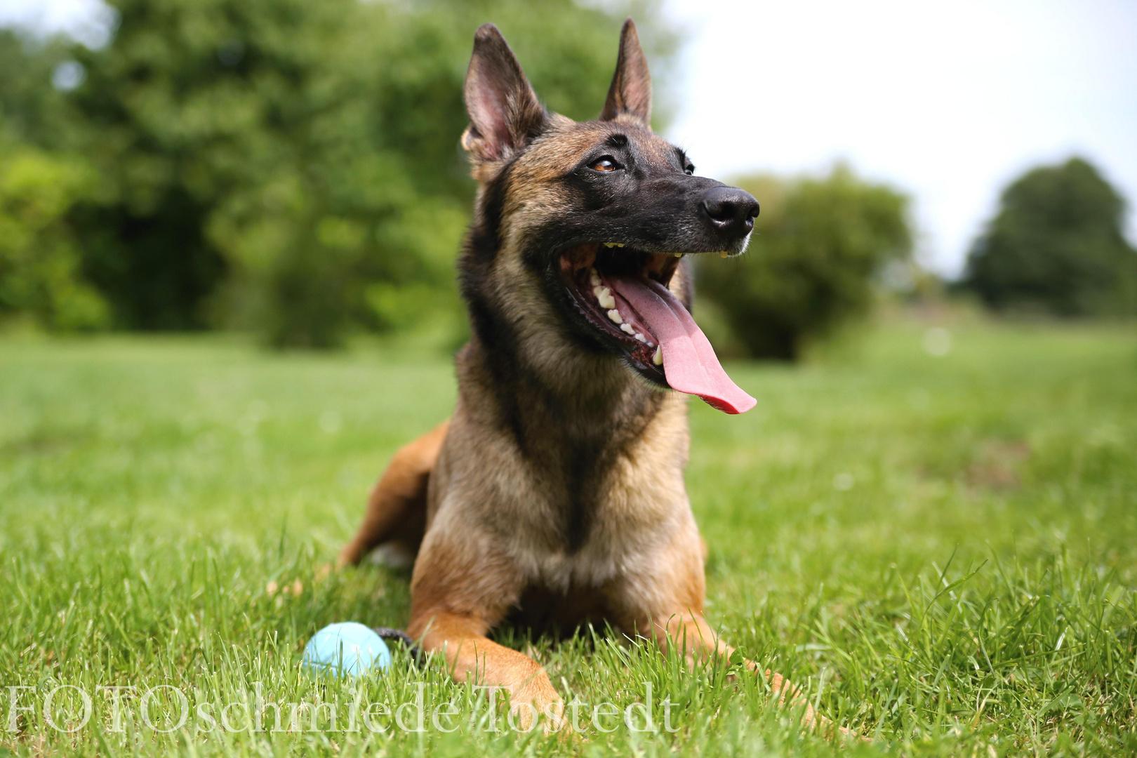 Bazooka, die Hundemama