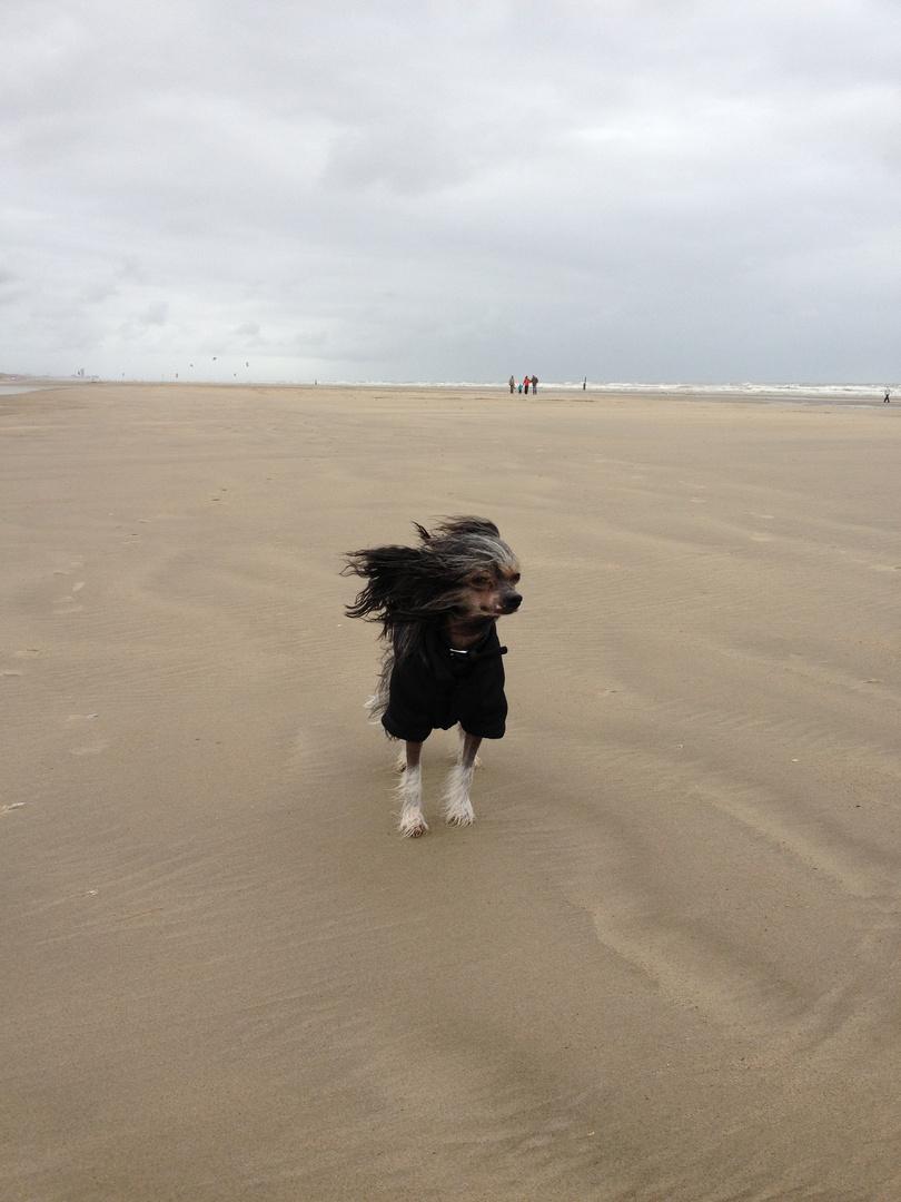Bazulu on the Beach