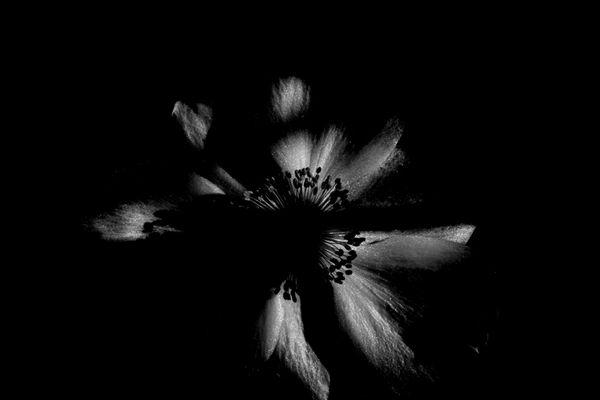 BB - BlütenBlätter