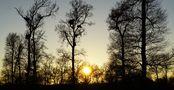 FR: Parure hivernale.... von PERSYN Thérèse