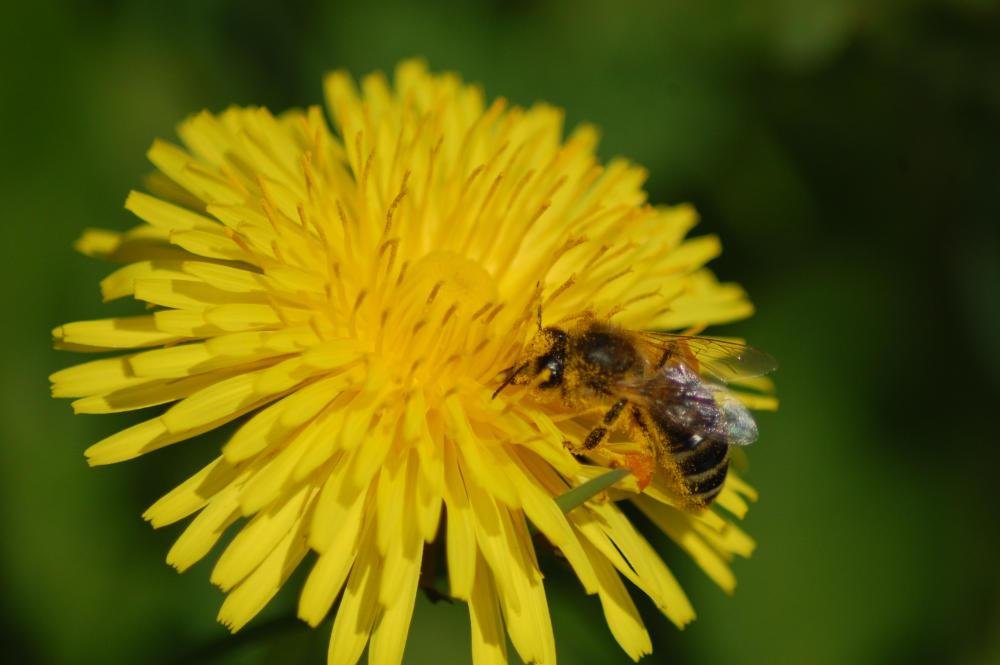 B&Bee