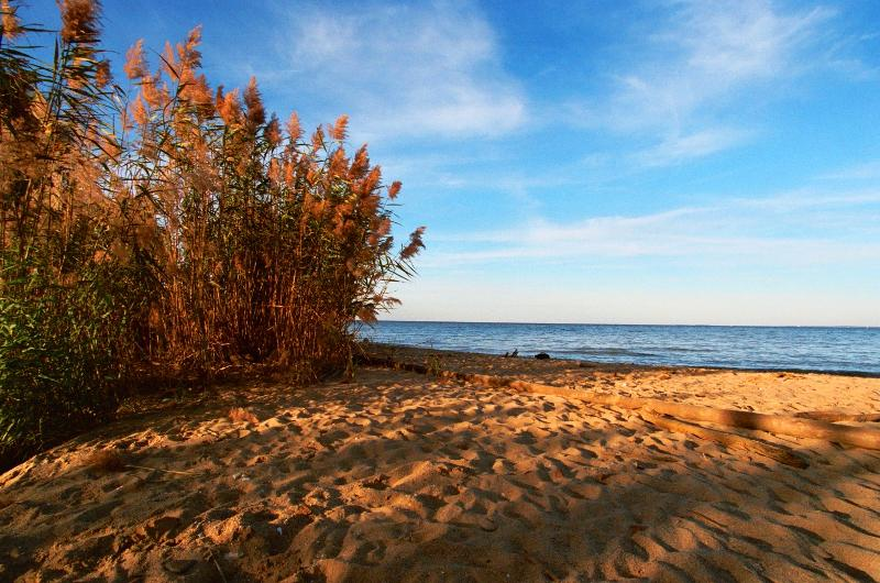 Beach at Calvert Cliffs, Maryland