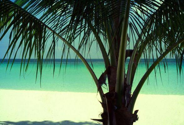Beach at Little Bay / Westmoreland