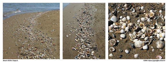 Beach Shells Triptych