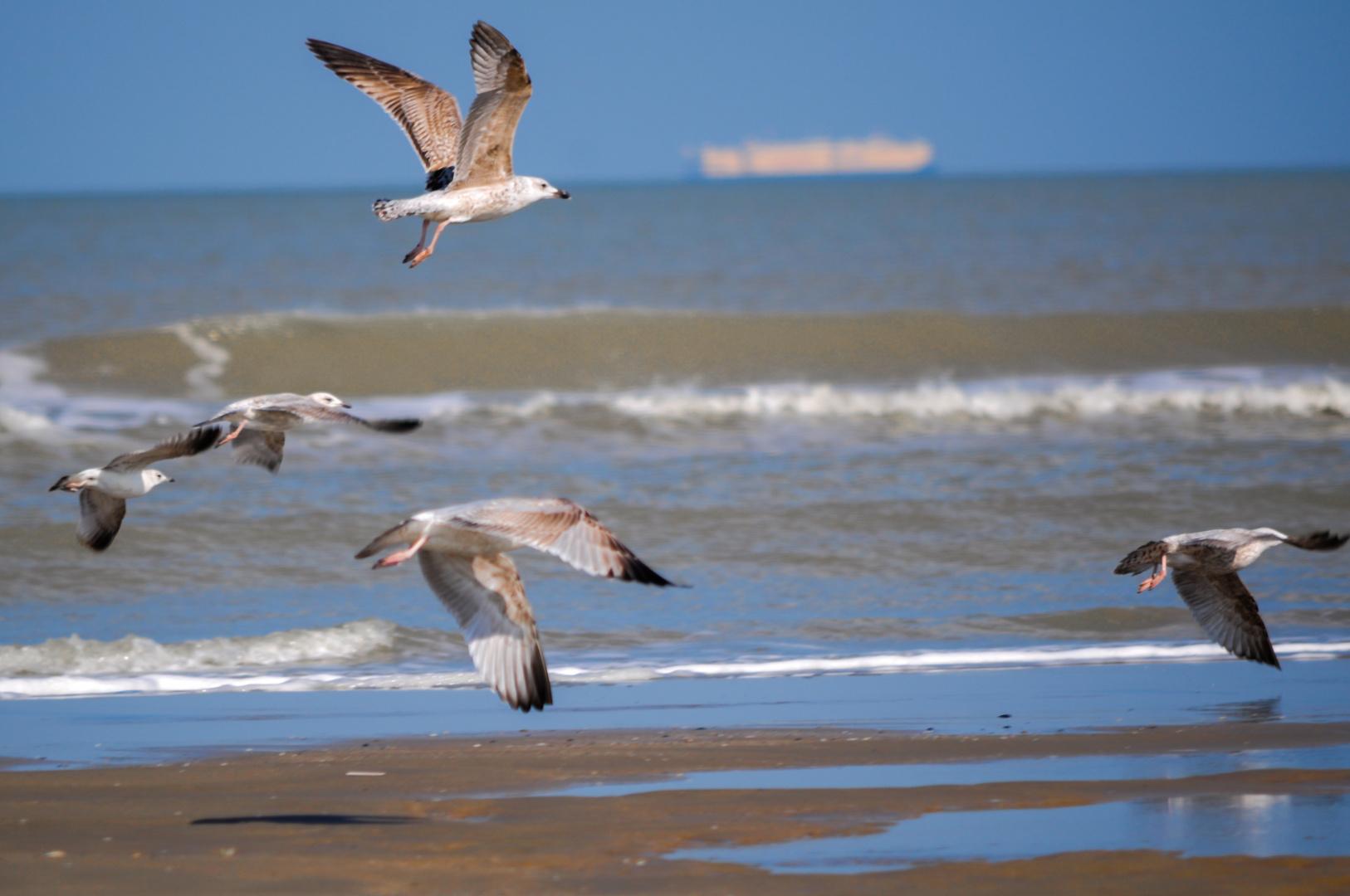 >>Beachlife