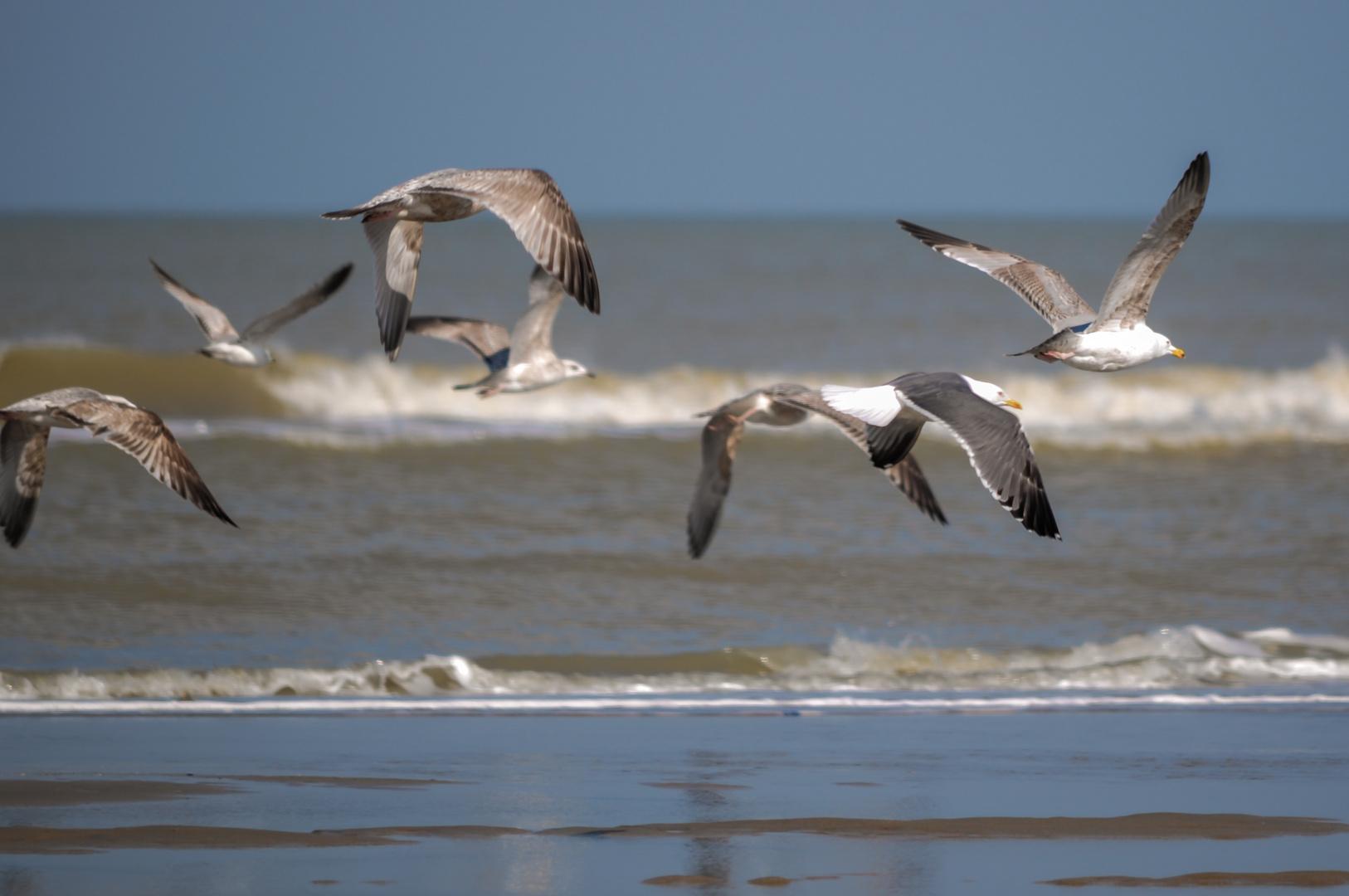 >>Beachlife II