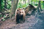 Bear On The Run