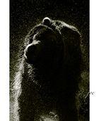 Bear VIII