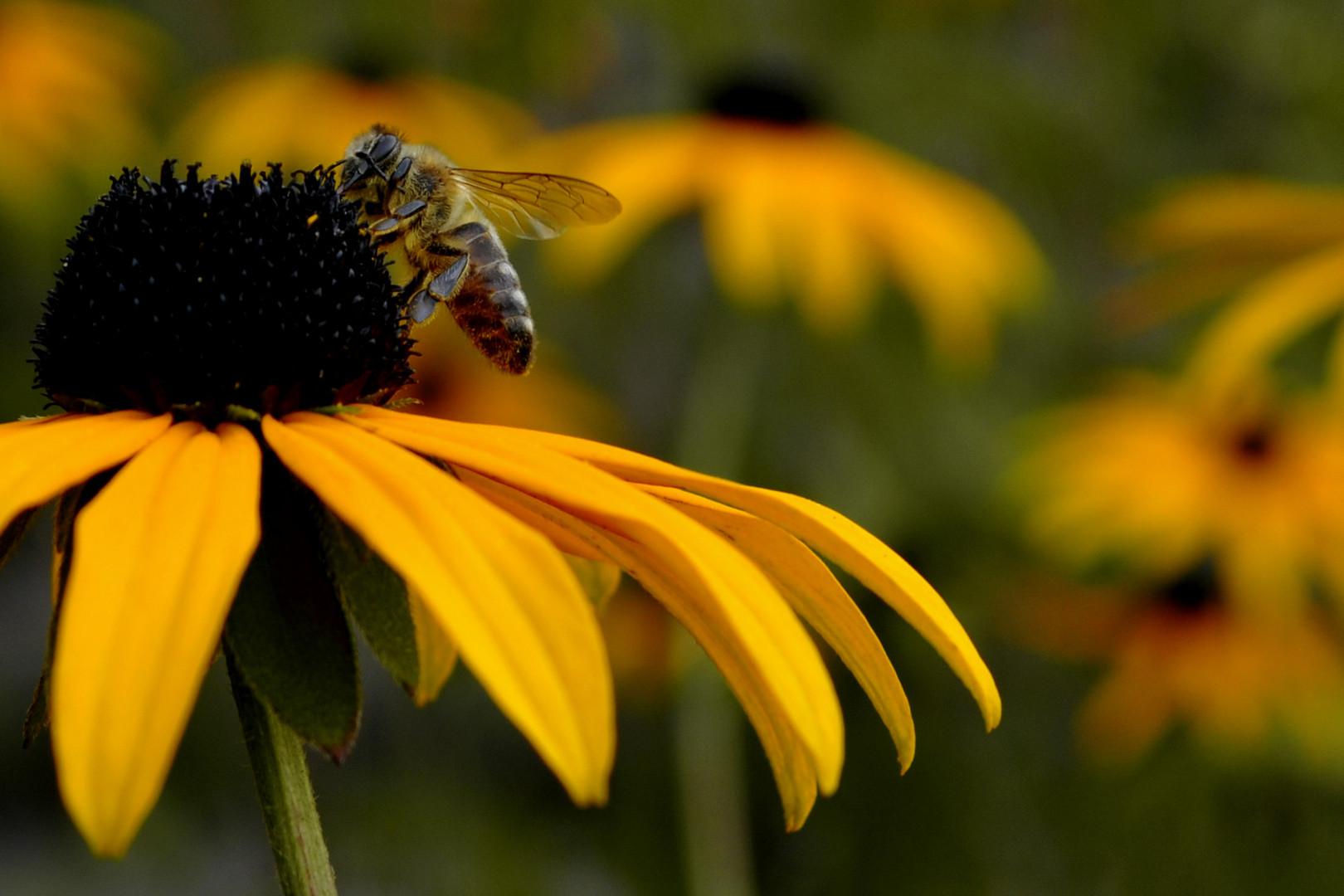 Beasy Bee