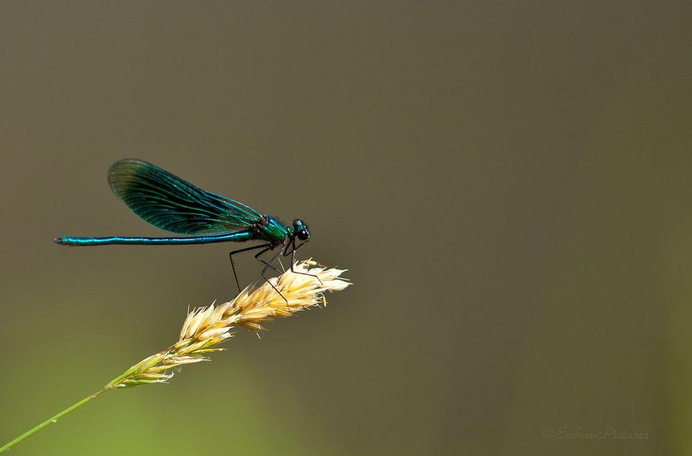 beau bleu