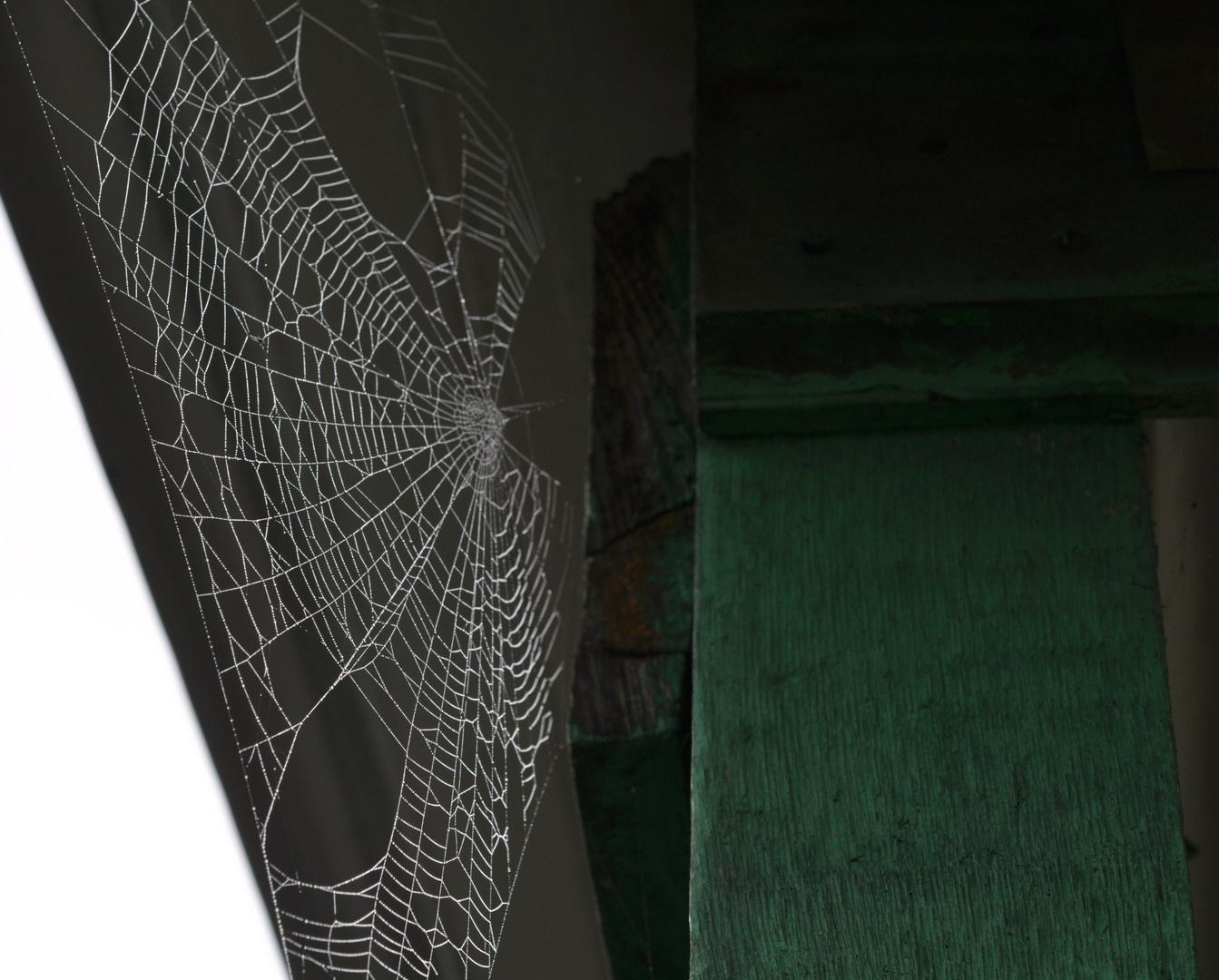 beau travail de l'araignée