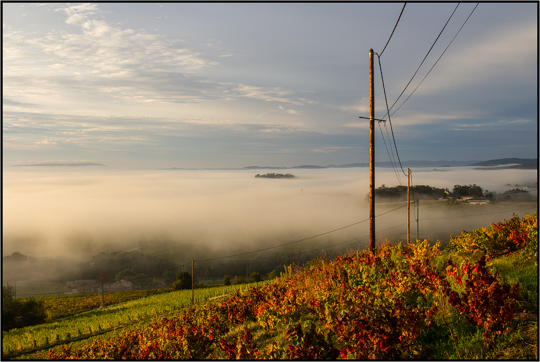 Beaujolais | early morning light |