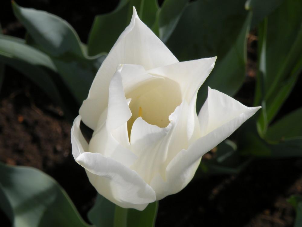 Beauté Blanche