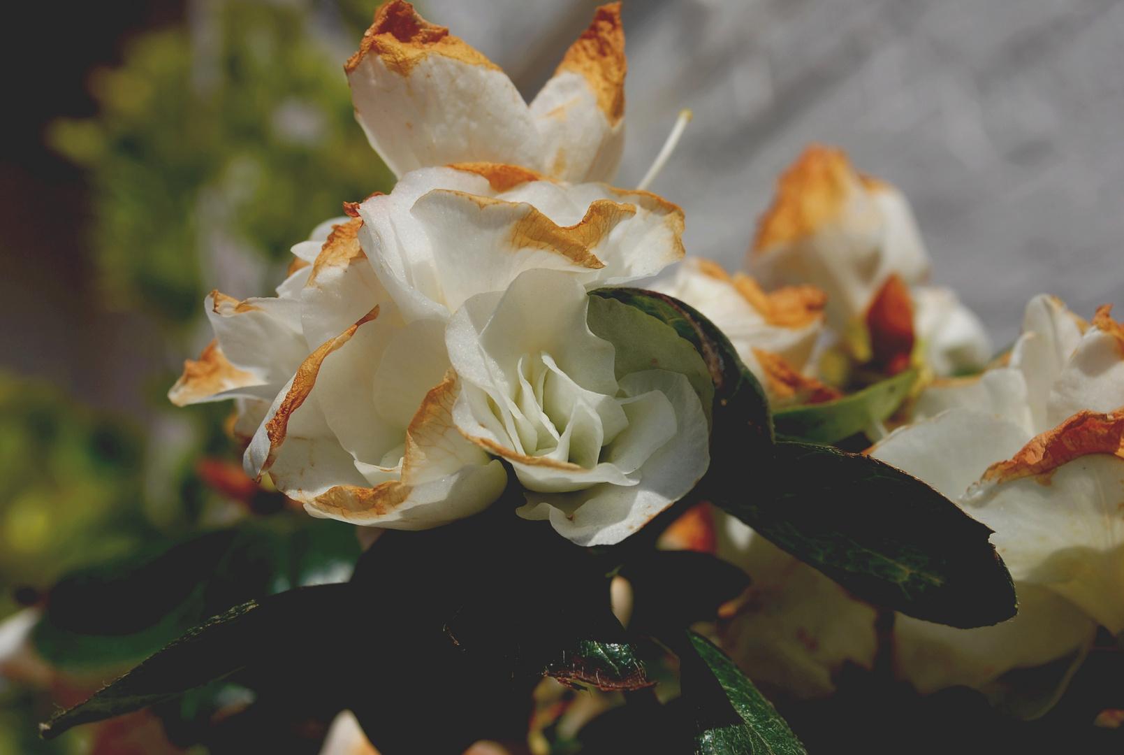 Beauté de la fleur
