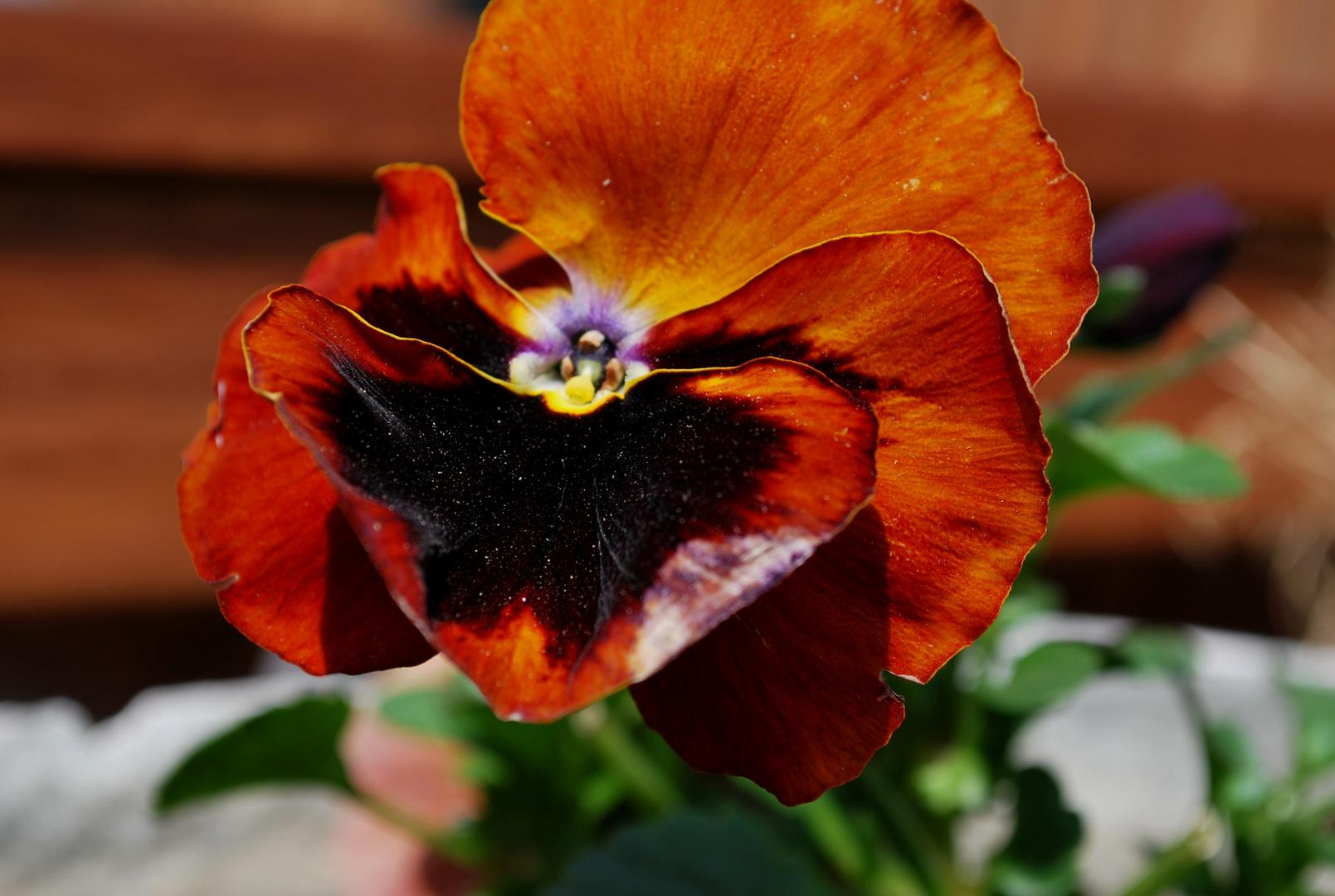 Beauté de la fleur rouge