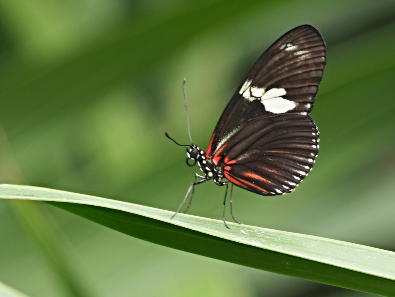 Beauté des ailes 16