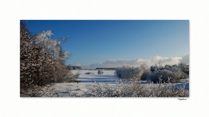 Beauté hivernale