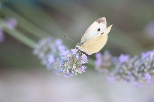 Beauté pâle